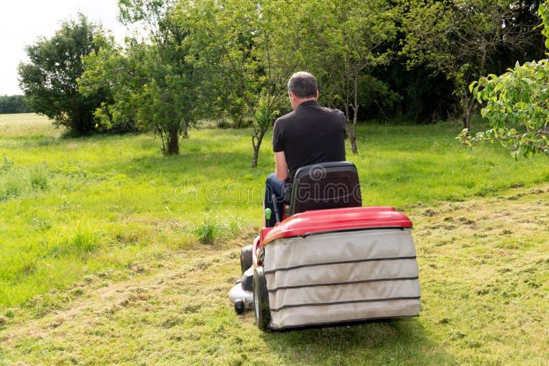 Rear back view gardener man driving a riding lawn mower in garden royalty free stock photos