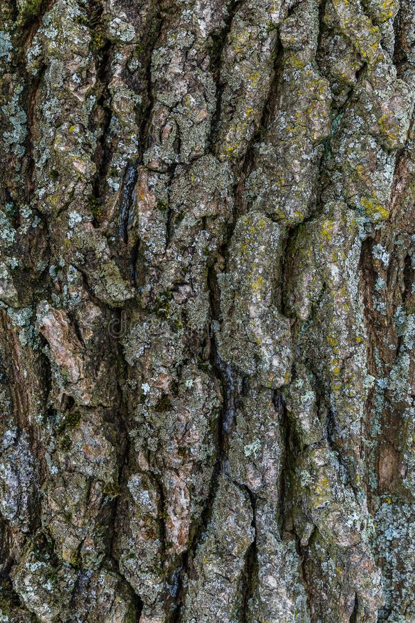 Rear background with tree bark, moss and lichen. stock images