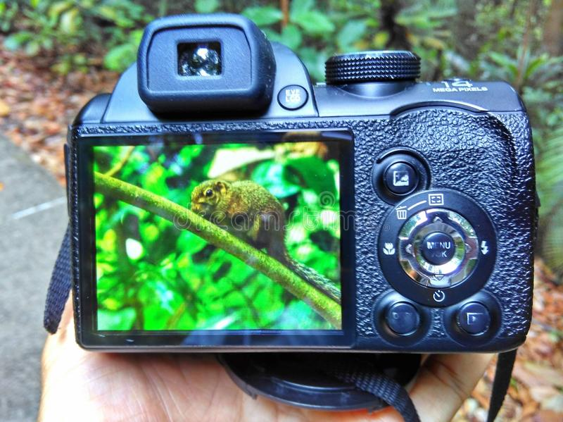 Rear LCD screen - digital camera royalty free stock images