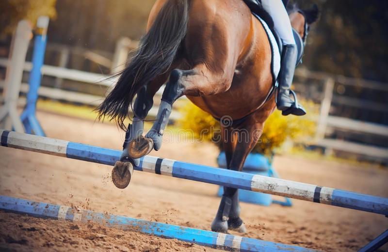 Rear view as a Bay horse jumped the blue barrier at a show jumping competition. Rear view as a Bay horse with a rider in the saddle jumped the blue barrier at a royalty free stock photos