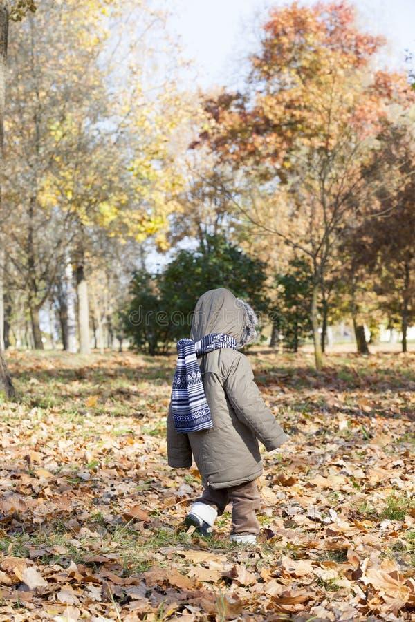 Child in autumn walk stock images