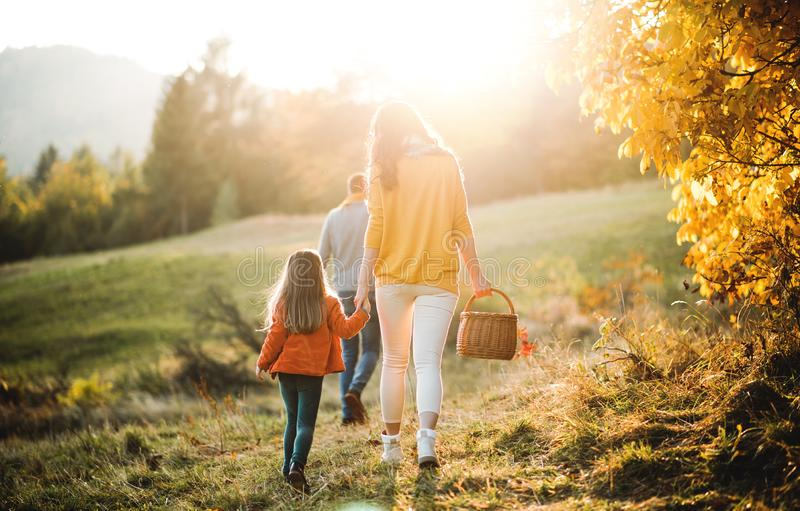 A rear view of family with small child on a walk in autumn nature. stock photos