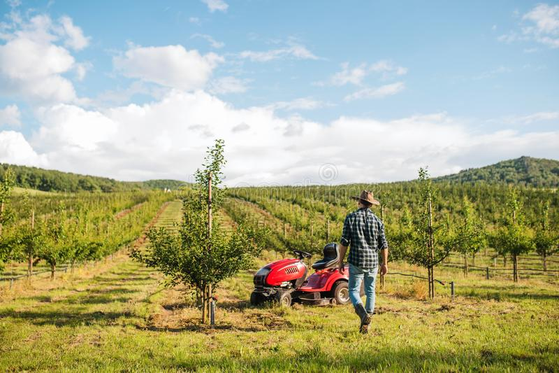 Rear view of farmer walking outdoors towards mini tractor in orchard. royalty free stock photos
