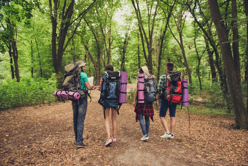 Rear view of four tourists walking in the forest, holding map, t royalty free stock images
