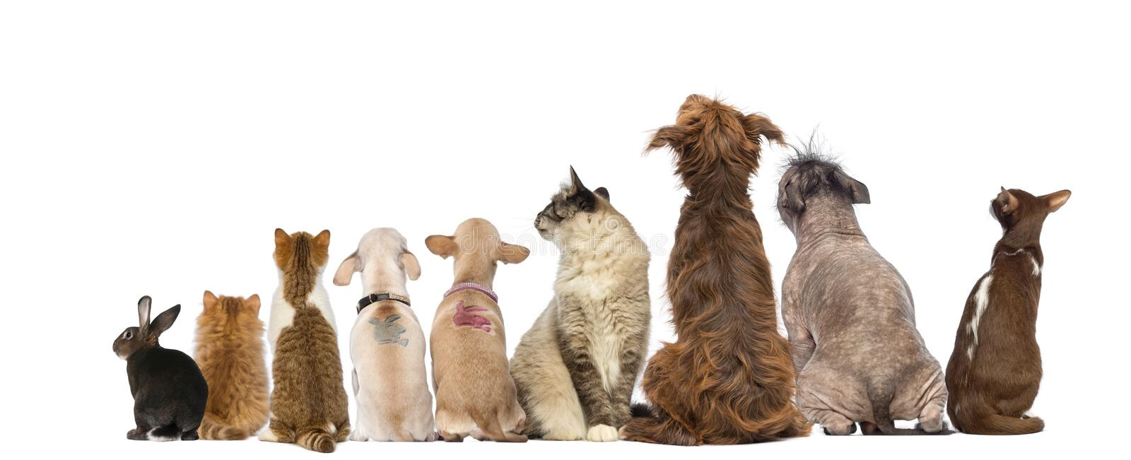 Rear view of a group of pets, Dogs, cats, rabbit, sitting. Isolated on white royalty free stock photos