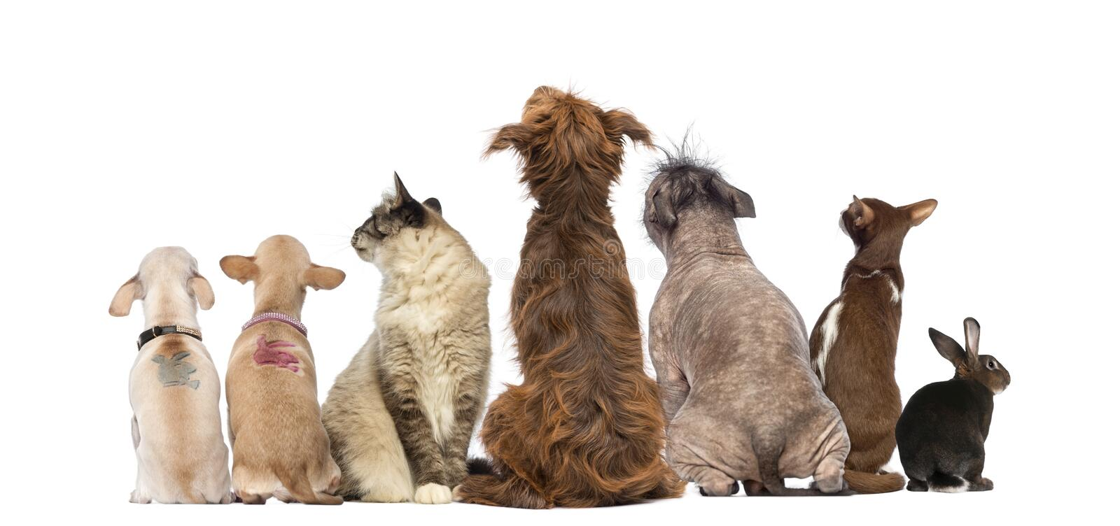 Rear view of a group of pets, Dogs, cats, rabbit, sitting. Isolated on white royalty free stock images