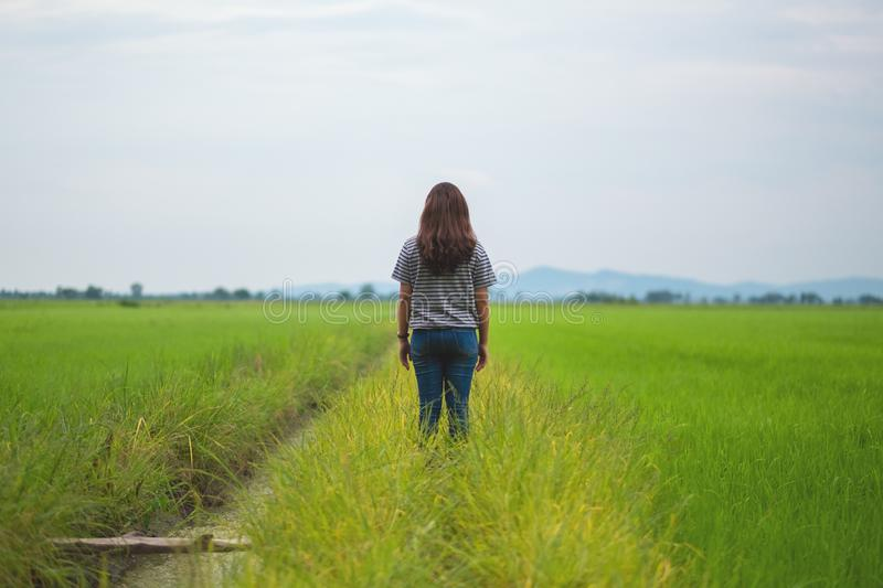 A woman standing and looking at a beautiful rice field with feeling relaxed and calm. Rear view image of a woman standing and looking at a beautiful rice field royalty free stock image