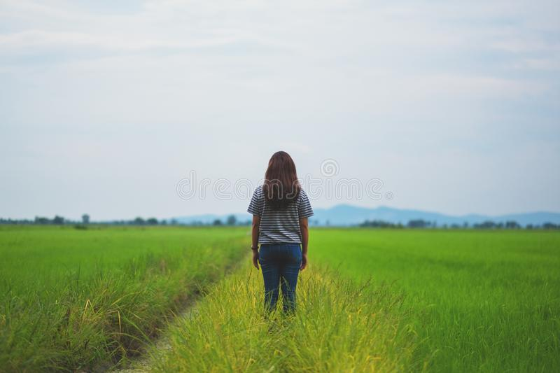 A woman standing and looking at a beautiful rice field with feeling relaxed and calm. Rear view image of a woman standing and looking at a beautiful rice field royalty free stock photo