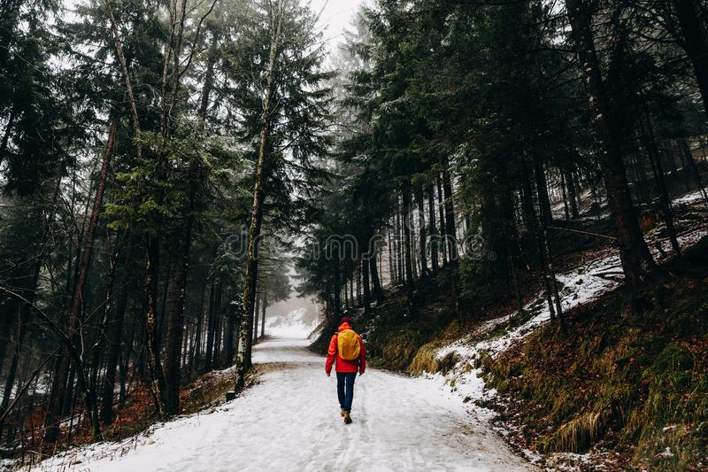 rear view of person walking in beautiful winter mountain stock photography