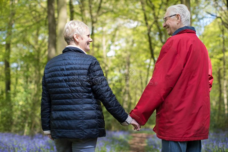 Rear View Of Senior Couple Walking Hand In Hand Through Bluebell. Rear View Of Senior Couple Walking Hand In Hand In Bluebell Wood royalty free stock images