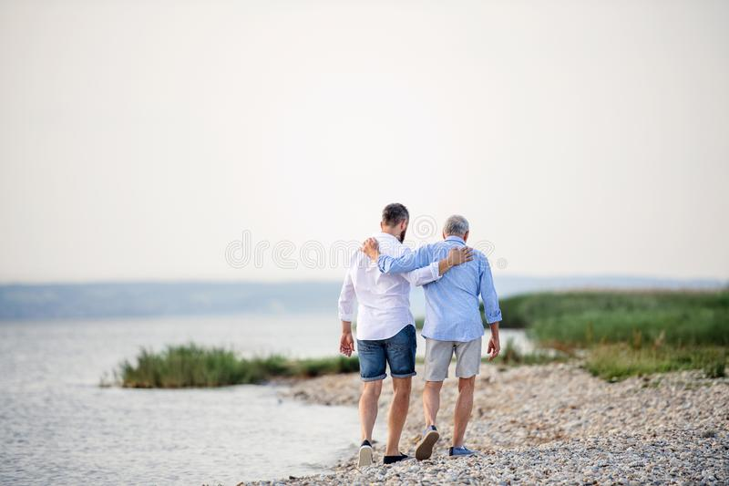 Rear view of senior father and mature son walking by the lake. Copy space. royalty free stock photos