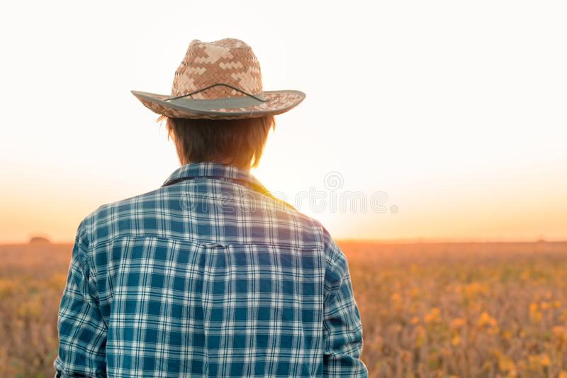 Rear view of soybean farmer looking at field royalty free stock photos