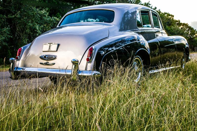 Rear view of vintage luxery limousine through tall grass on a rural Texas road. Rear view of a two-toned 1962 Bentley through the tall grass on a Texas country stock image