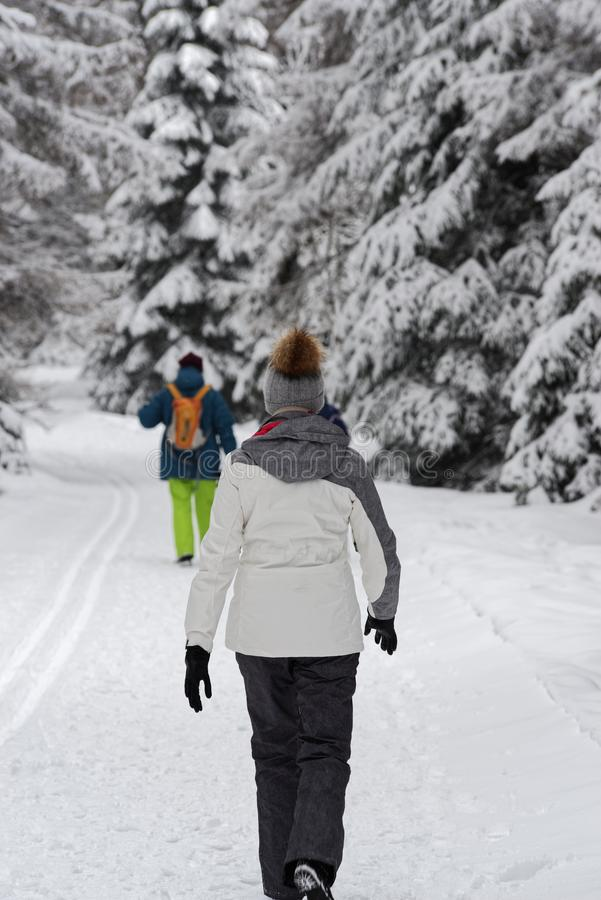 Rear view of young woman hiking in a winter forest royalty free stock images
