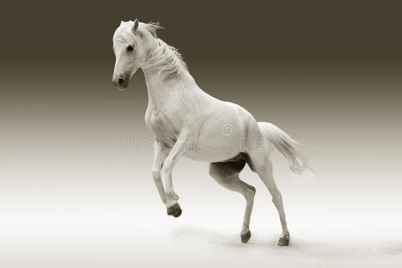 Rearing white horse royalty free stock image