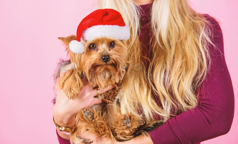 Reason love christmas with pets. Ways to have merry christmas with pets. Girl attractive blonde hold dog pet pink. Background. Woman and yorkshire terrier wear stock image