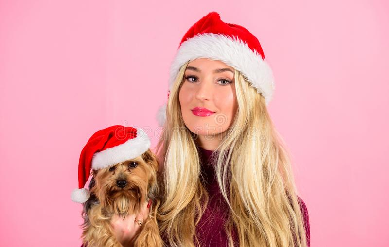 Reason love christmas with pets. Ways to have merry christmas with pets. Woman and yorkshire terrier wear santa hat. Girl attractive blonde hold dog pet pink stock image