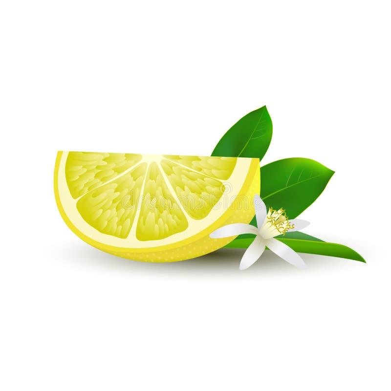Excepcional Página Para Colorear Rebanada De Limón Molde - Ideas ...