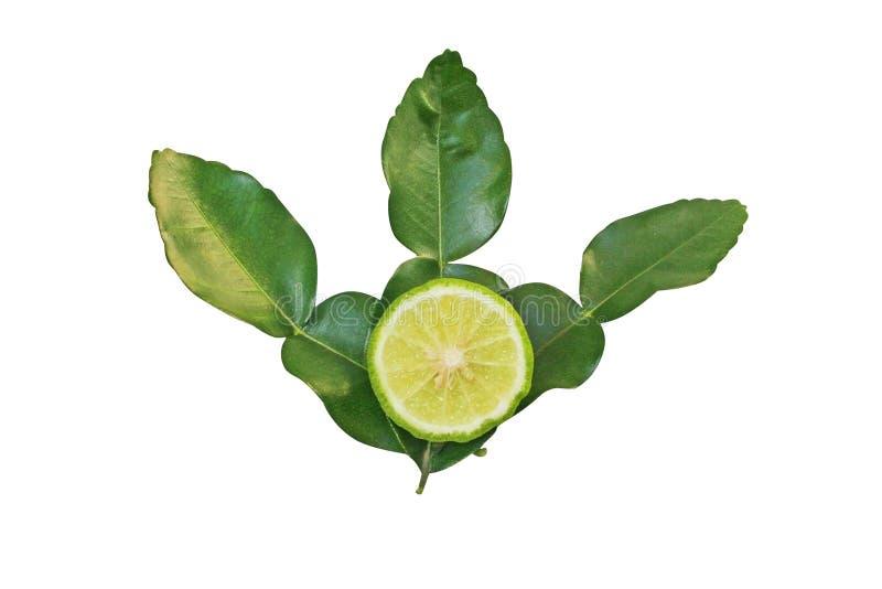 Rebanada de cal o de bergamota del cafre con las hojas aisladas en el fondo blanco imagen de archivo