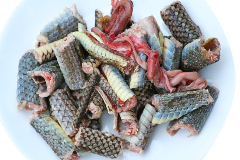Rebanada de carne de la serpiente en serpiente de rata indochina del plato, preparada para cocinar fotos de archivo libres de regalías