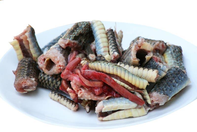 Rebanada de carne de la serpiente en serpiente de rata indochina del plato, preparada para cocinar aislada en el fondo blanco fotografía de archivo