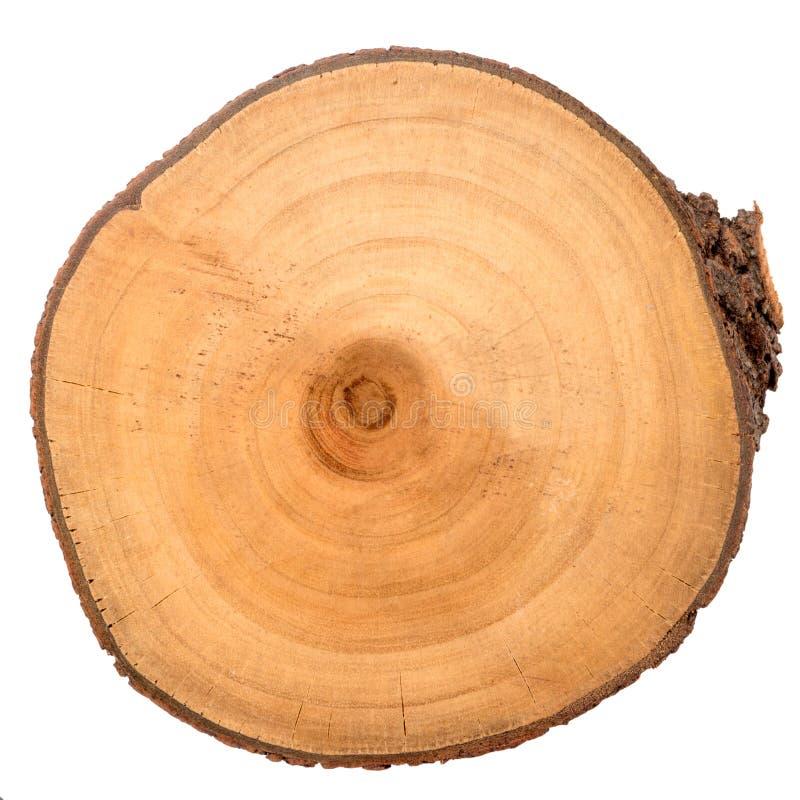 Rebanada de madera del registro imagen de archivo libre de regalías