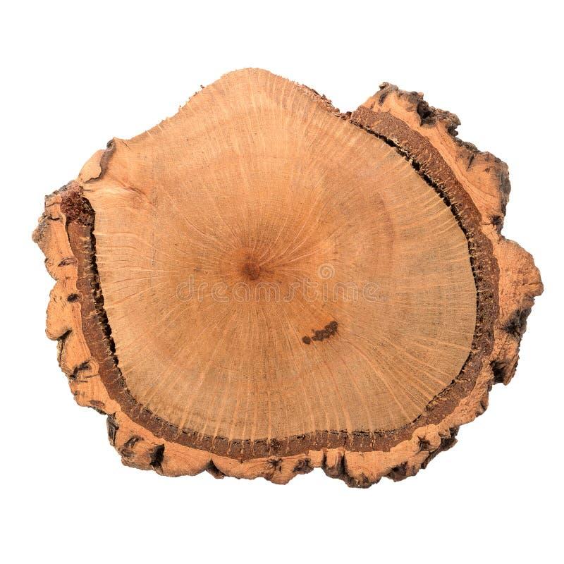 Rebanada de madera del registro fotografía de archivo libre de regalías