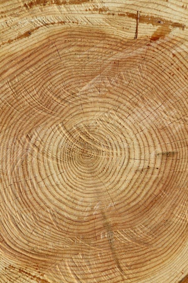 Rebanada del árbol imagenes de archivo