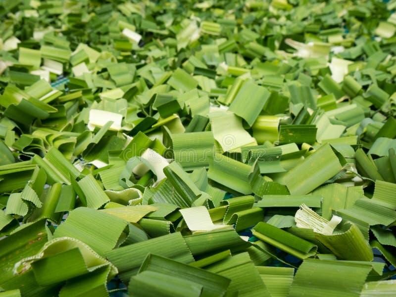 Rebanada del lote de hoja pandan foto de archivo libre de regalías