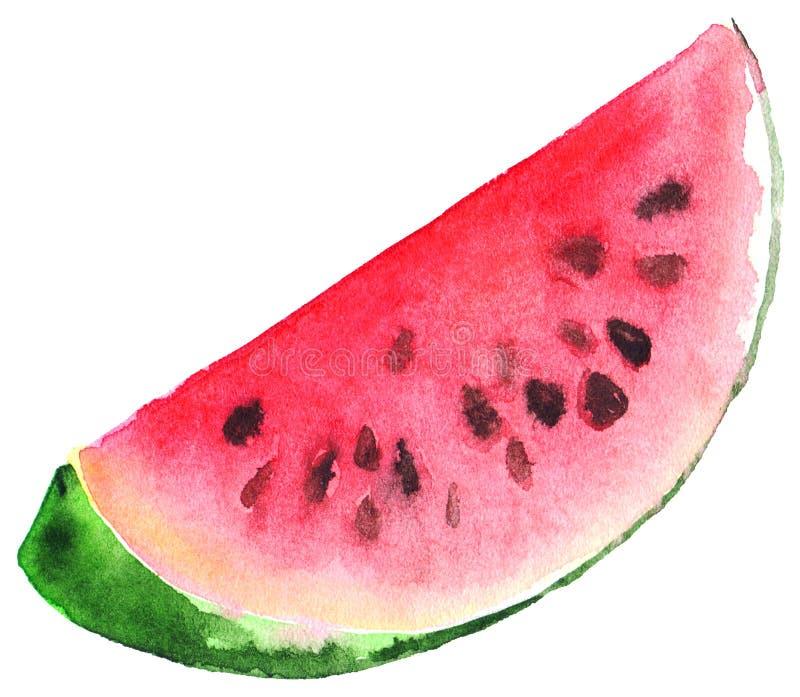 Rebanada jugosa de la sandía roja verde de la acuarela ilustración del vector