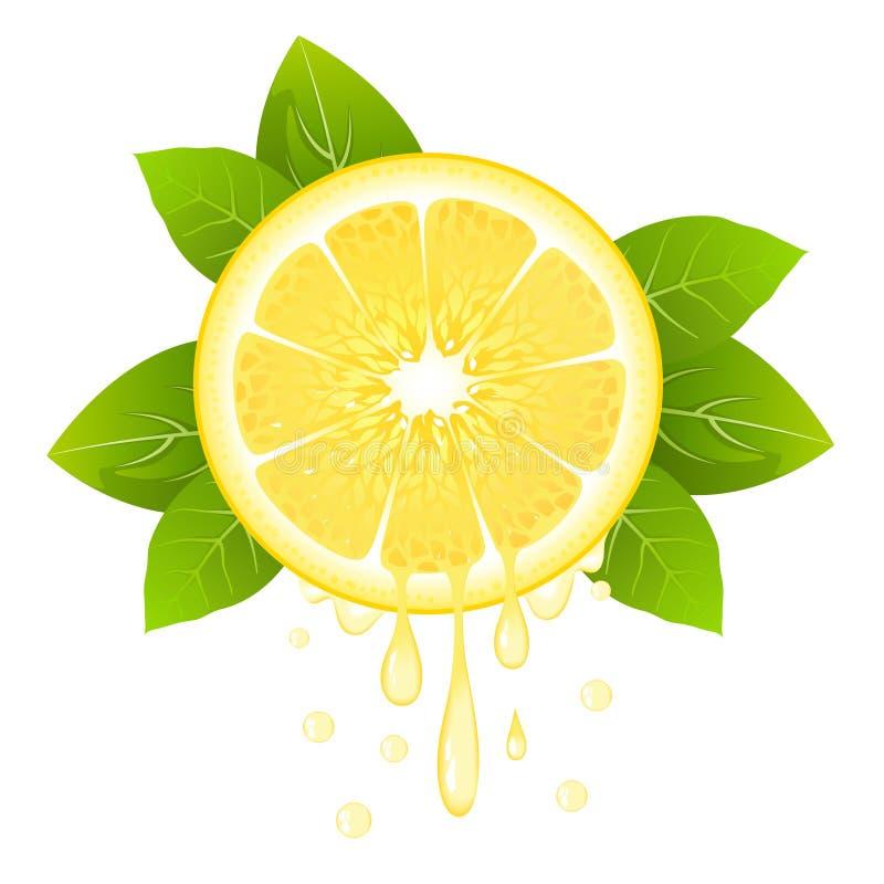 Rebanada realista del limón con las hojas y los descensos del jugo Fruta jugosa Diseño fresco de la fruta cítrica en el ejemplo b libre illustration