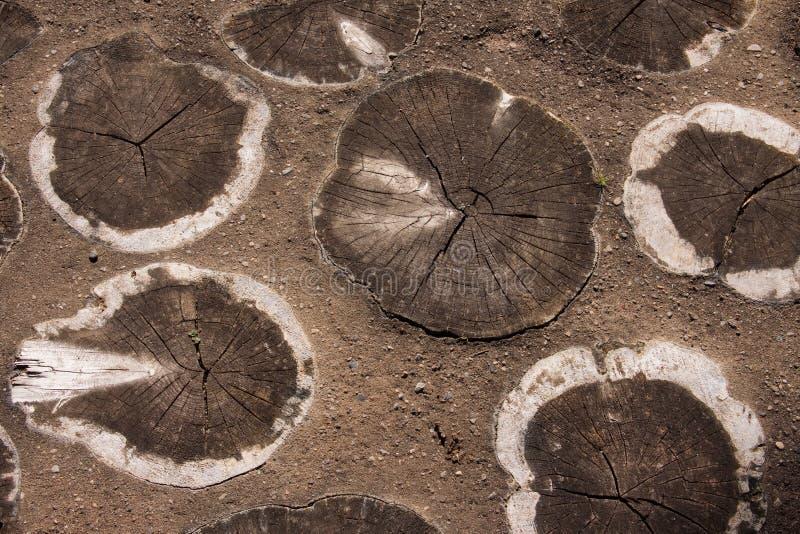 Rebanadas del árbol integradas en una trayectoria fotografía de archivo