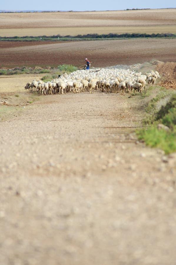 Download Rebanho imagem de stock. Imagem de seca, casa, ovelha - 10058135