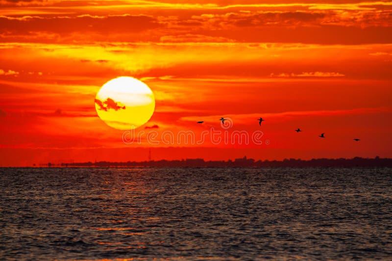 Rebanho da silhueta das gaivotas durante um por do sol colorido fotografia de stock royalty free