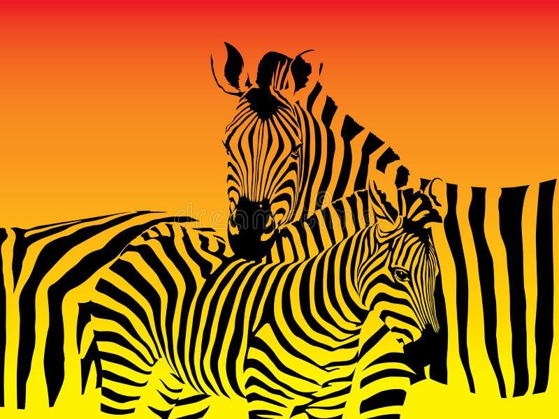 Rebanho das zebras ilustração stock