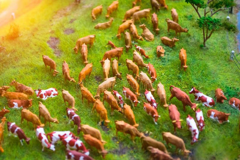 Rebanho de brinquedos diminutos das vacas em um prado que cultiva a paisagem, vista superior fotografia de stock royalty free