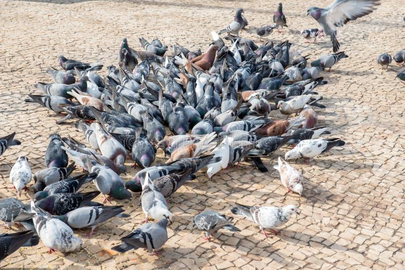 Rebanho de pássaros de alimentação imagens de stock
