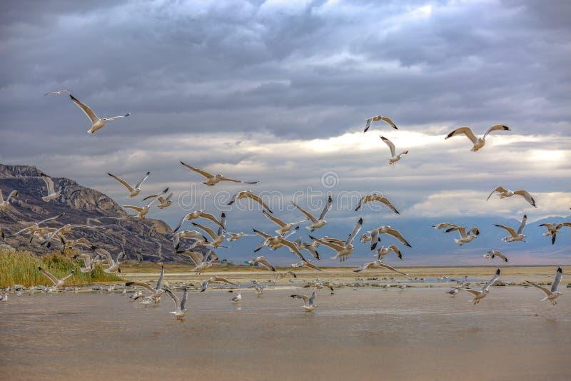 Rebanho de pássaros de voo contra um céu coberto nuvem foto de stock