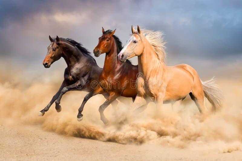 Rebanho do cavalo imagem de stock royalty free