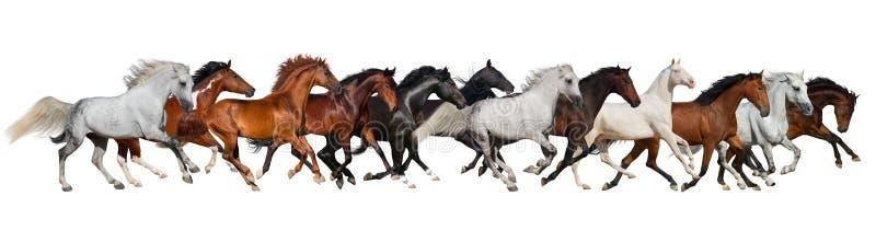 Rebanho do cavalo isolado fotos de stock royalty free