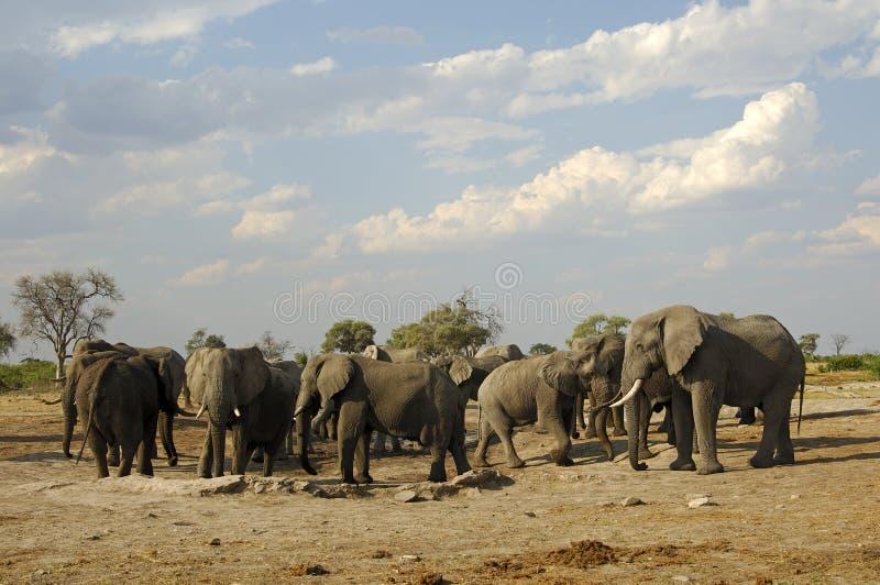 Rebanho do elefante imagens de stock royalty free