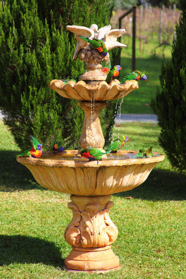 Rebanho do papagaio na fonte imagens de stock royalty free