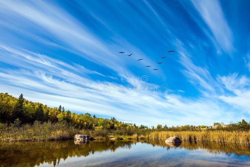 Rebanho do voo dos pássaros imagens de stock