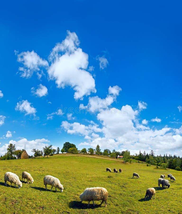 Rebanho dos carneiros na parte superior do monte da montanha do verão imagens de stock royalty free