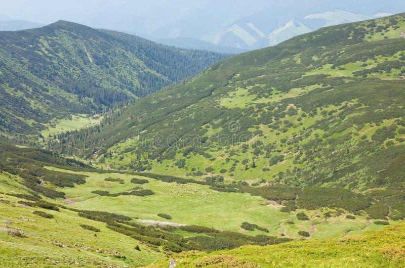 Rebanho dos carneiros no pasto da montanha do verão imagem de stock royalty free