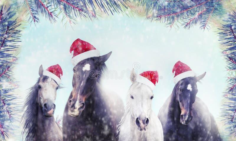 Rebanho dos cavalos com o chapéu de Santa no fundo da neve do inverno e da árvore de Natal bandeira imagens de stock royalty free