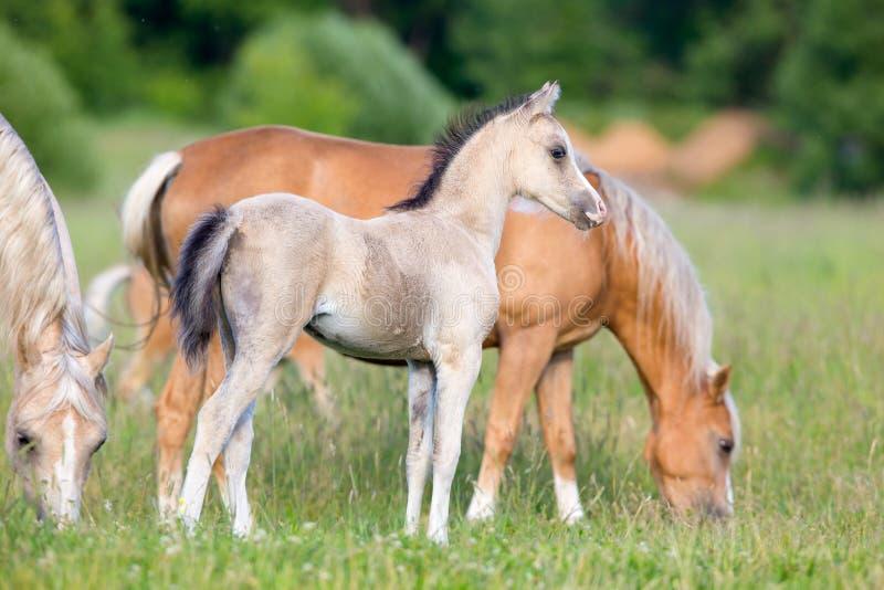 Rebanho dos cavalos no campo imagem de stock