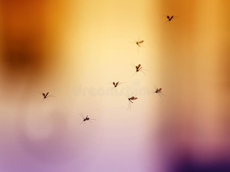 Rebanho dos mosquitos prejudiciais e perigosos pequenos que voam no a fotos de stock