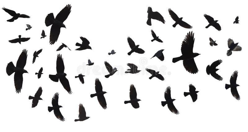 Rebanho dos pássaros isolados imagens de stock