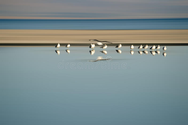 Rebanho dos pássaros na fileira imagens de stock royalty free